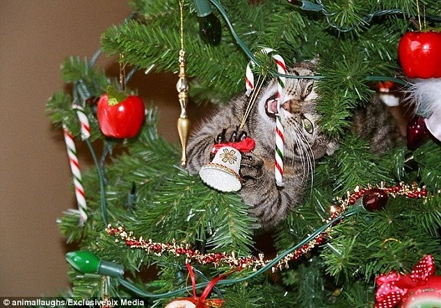Cats and Christmas Trees: Look Out! | Life With Cats