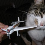 Pets Can Now Fly In Delta Plane Cabins