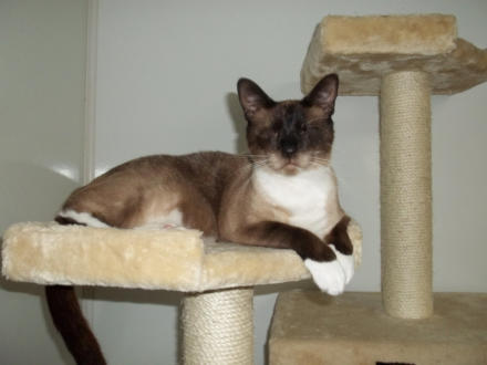 The Blind Cat Rescue & Sanctuary Gives Blind Cats a Forever Home