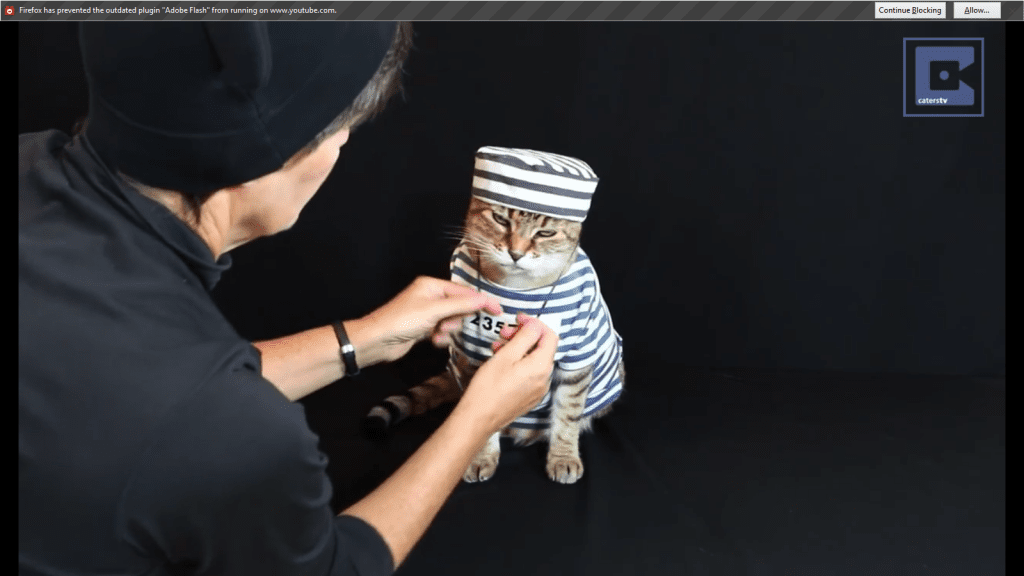 Cat Gets Dressed Up In Many Different Outfits