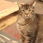 Feral Cats Find Jobs Protecting Chicago Brewery From Rats