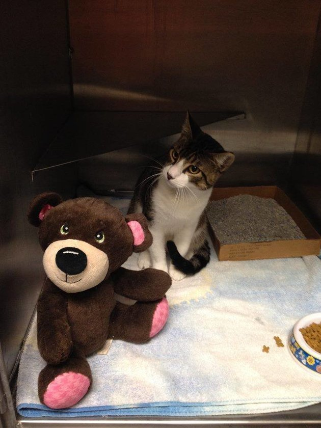 Homeless Woman Rescues Abandoned Cat