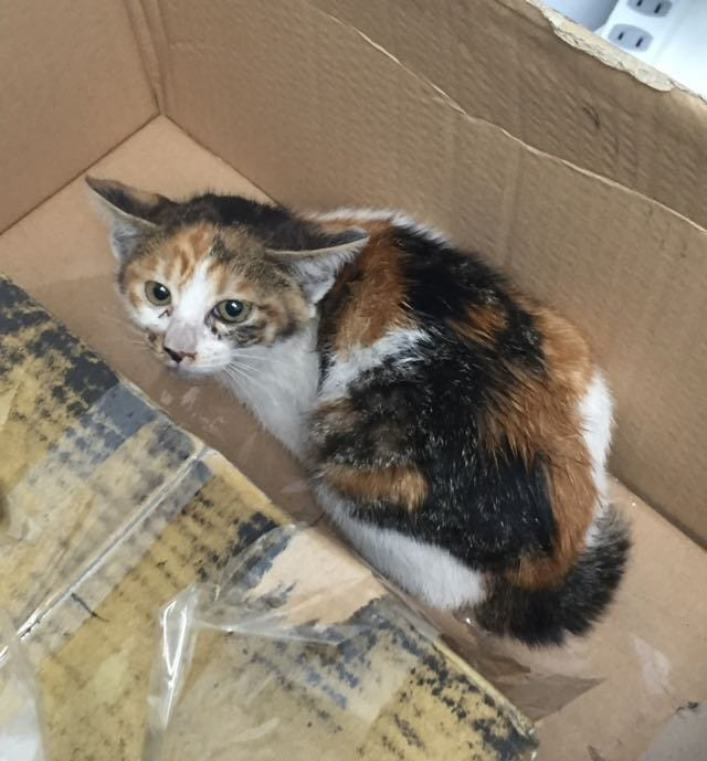 man dismantles his car to rescue a kitten life with cats