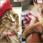 Hoop Stars Say Their Celebrity Cats Can't Cohabitate