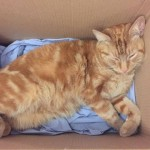 Ginger Cat Takes Up Residence in King's College London Student Halls