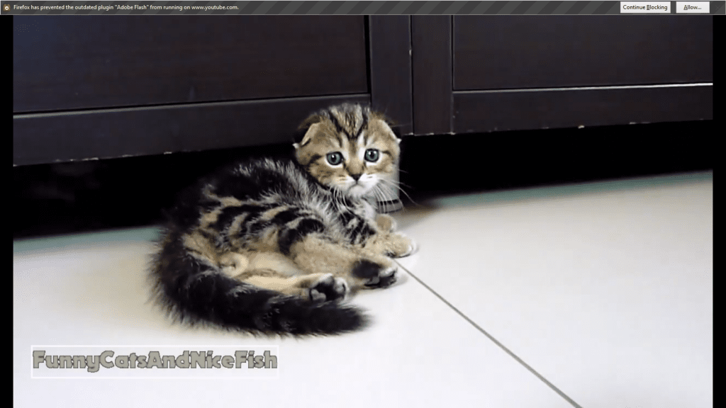 Neo the Kitten Tries Out His New Moves