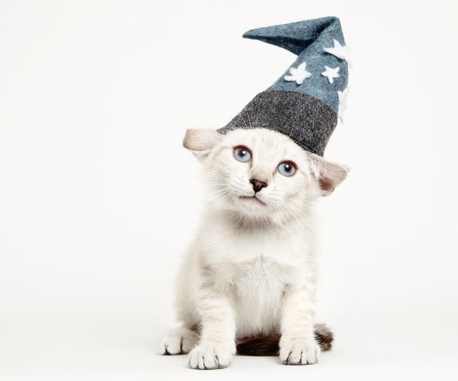 """""""Cats In Hats"""" Photo Series Promotes Shelter Cat Adoption"""