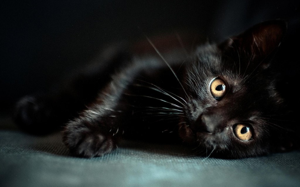 black_cat_5_wallpaper_best