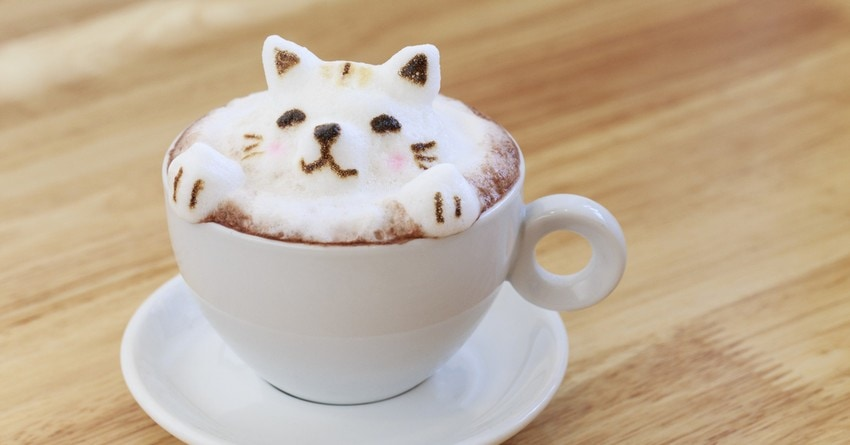New Cat Cafe in Auckland, New Zealand