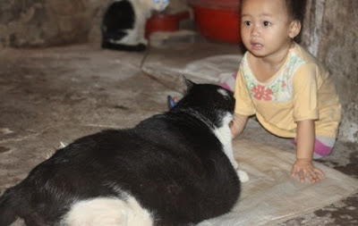 Fattest Cat Titleholder May Be Displaced
