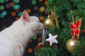 christmas trees are dangerous and nobody warned the cat - Are Christmas Trees Poisonous To Cats