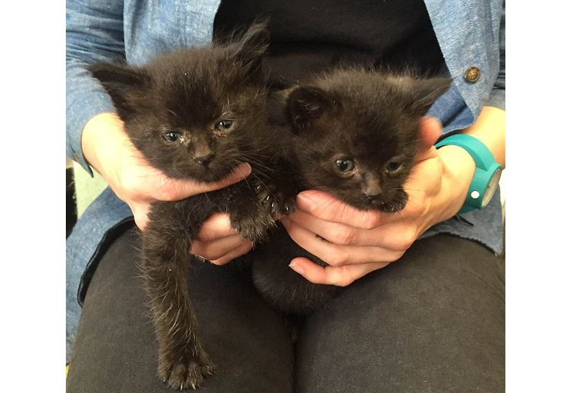 Kittens saved from crusher at recycling facility