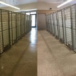 The Silence of the Animal Shelter