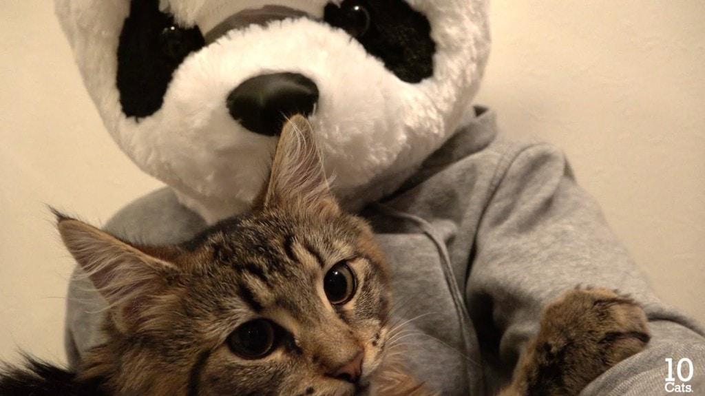 Osamu loves the panda