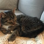 Arthur the Subway Cat Returns Home Safe and Sound