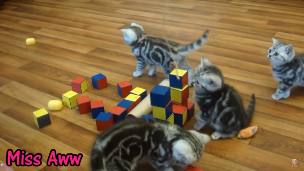 Kittens Playing With Blocks