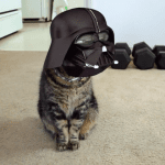 Darth Vader Cat Video Is a Hilarious Take on Star Wars