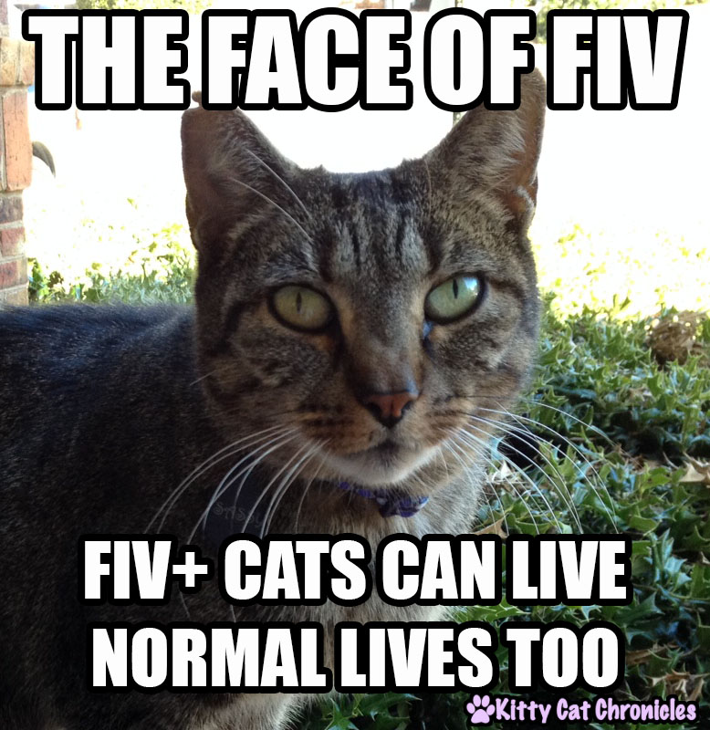 Funny Cat Hospital Pictures