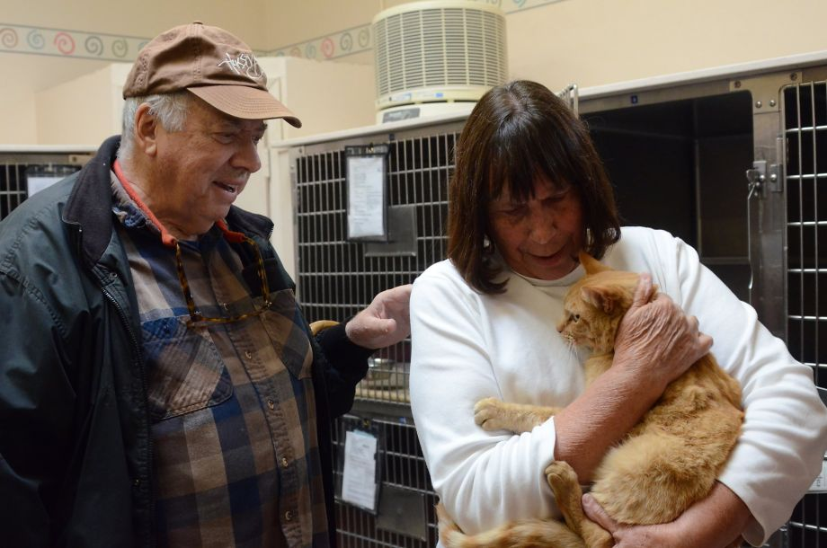 Missing Cat Returned Home After 8 Years