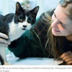 Christmas Joy: Lost Cat Comes Home After Seven Years