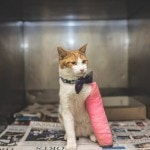 Cat With Broken Leg Finds New Home Thanks to Shelter Employee