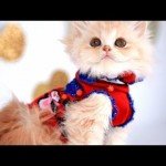 A Snip Snip Here: Make Your Own Kitten Sweater