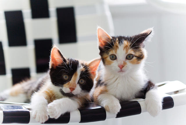 Two adorable sister kittens sitting together