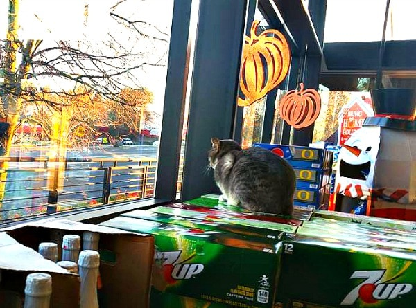 cecil_the_grocery_store_cat 1