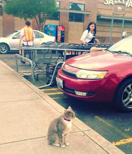cecil_the_grocery_store_cat 4