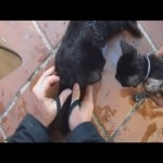 Firefighters Revive Four Kittens in Dramatic Video