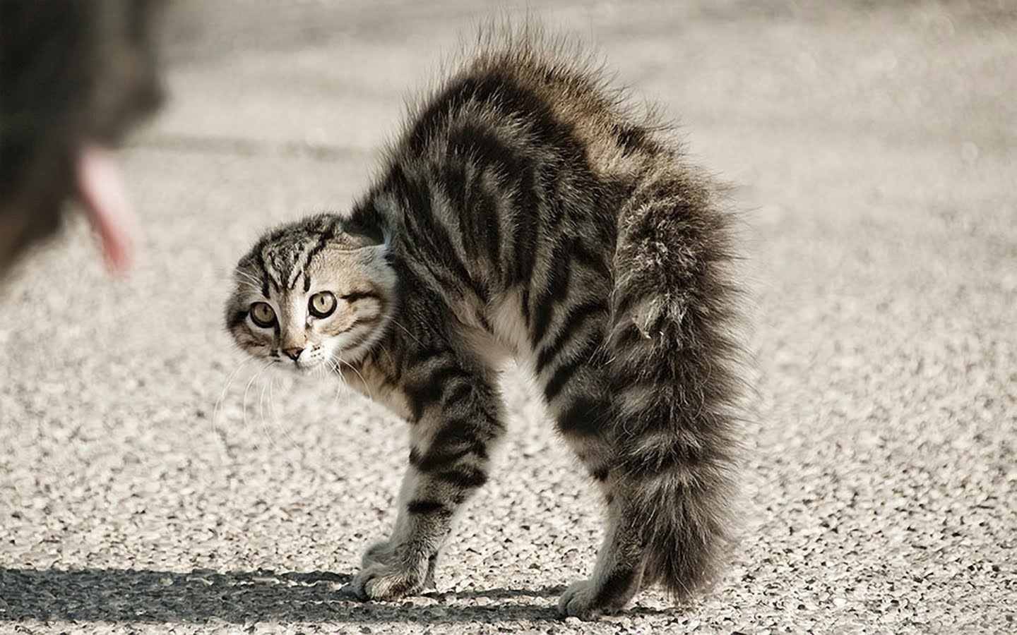 Is there truth in the tail life with cats for What does flipping houses mean
