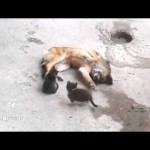 Street Cat Introduces Kittens to Dog and Something Magical Happens
