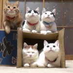 Zen Moment: Five Cats And A Box