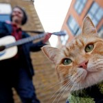 From Street to Screen: Bob the Cat