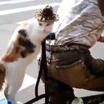 Check Out the Passenger Cat