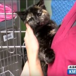 Mother Cat Alerts Woman to Plight of Kitten Frozen to Concrete Drain