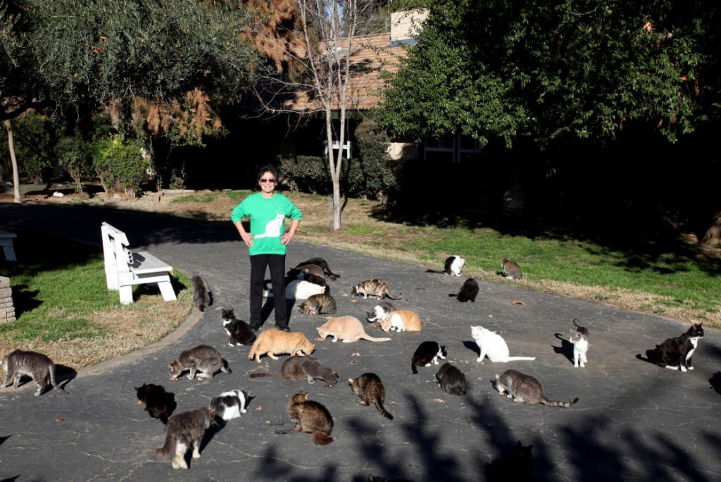 """""""Cat Lady"""" Has Over 1,000 Cats – But It's Not What You Think"""