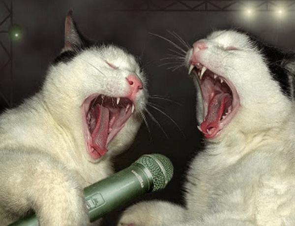 cat singing 2