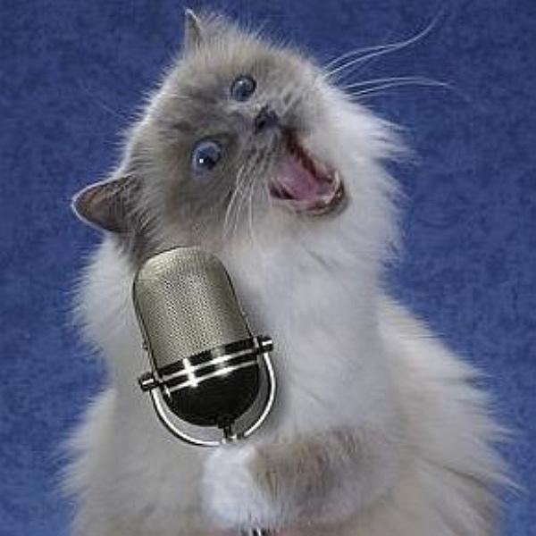 cat singing 4