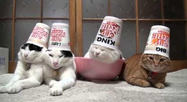 Cat Noodle Cup Gif