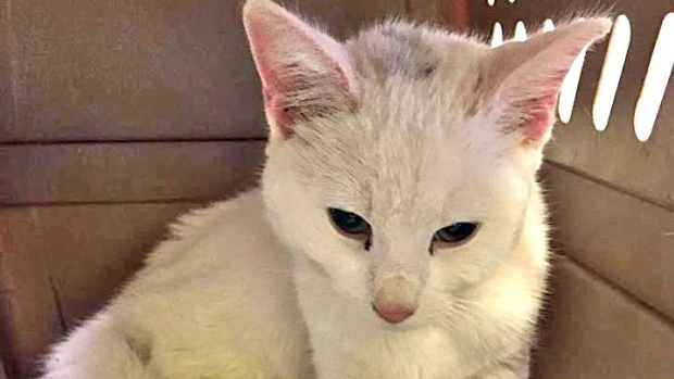 snow-the-rescued-cat