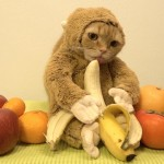 Ten Cats Video of Kitty in Monkey Get Up Goes Viral