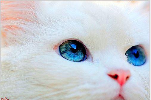 whitecats