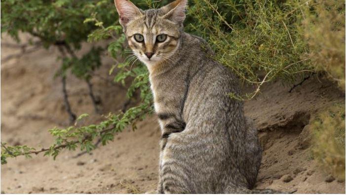 NEwildcat