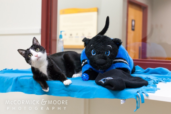 Adopt a Carolina Mini-Panther to Help Empty Animal Shelters