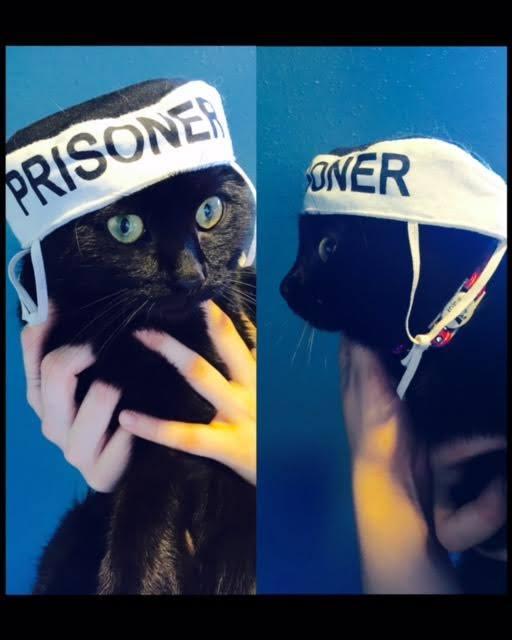 Cat Calls 911, Prompting Police Response