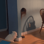 Cat Plays Hide and Seek with Girl