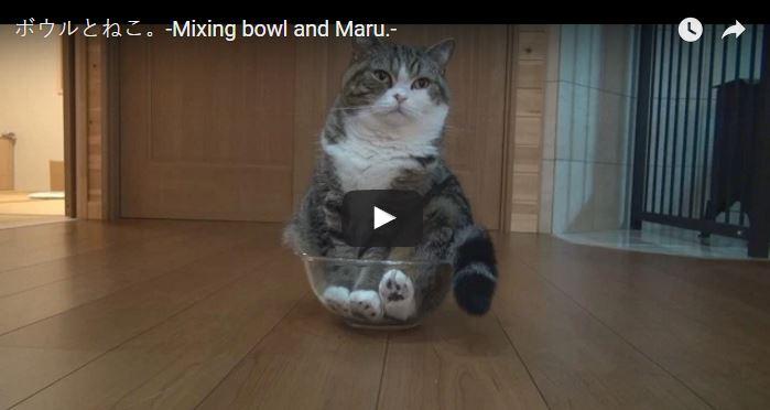 Maru Versus a Glass Bowl
