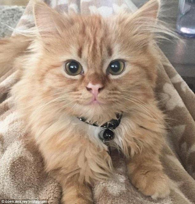 Sweet Alternative to Grumpy Cat: Smiling Rey