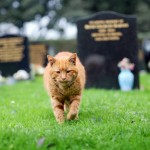 Passing of Barney, the Cemetery Cat, Mourned